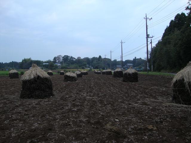 いったい何の畑でしょう?_a0126590_0472187.jpg