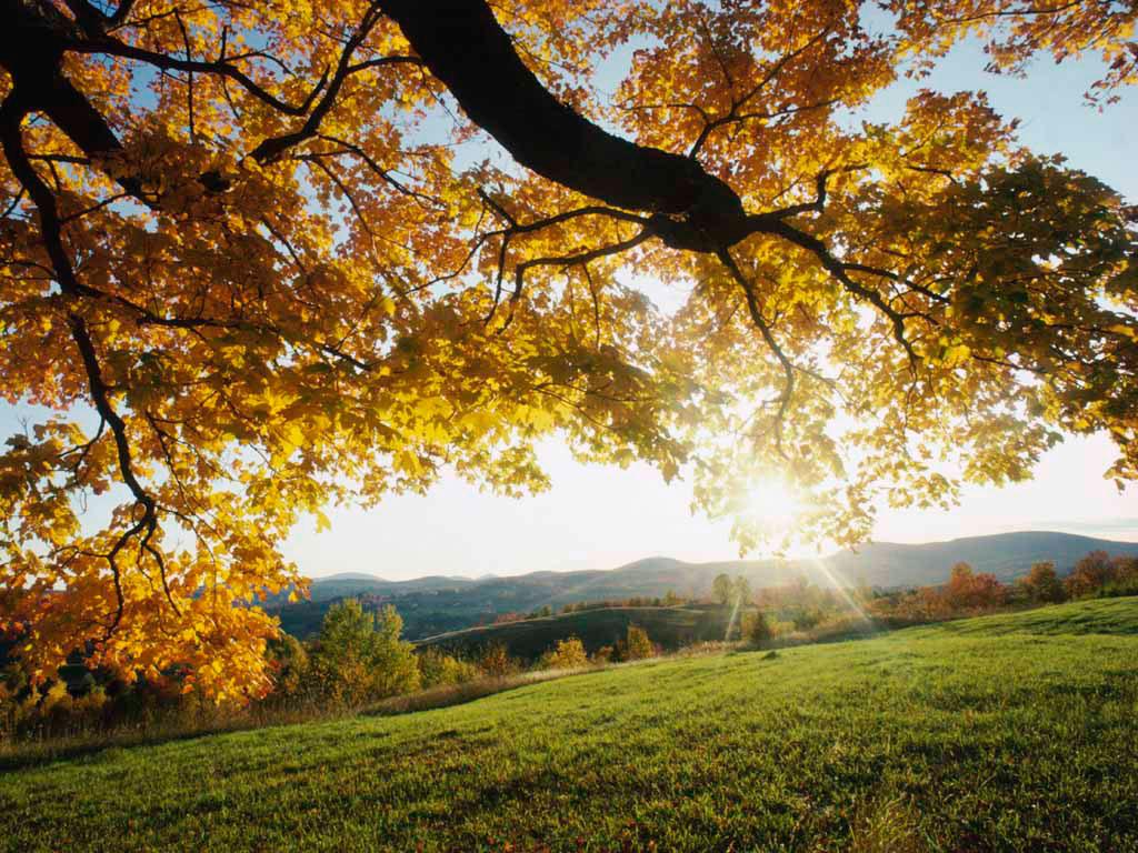 秋晴れの日曜日に・・・。_a0112393_17184316.jpg