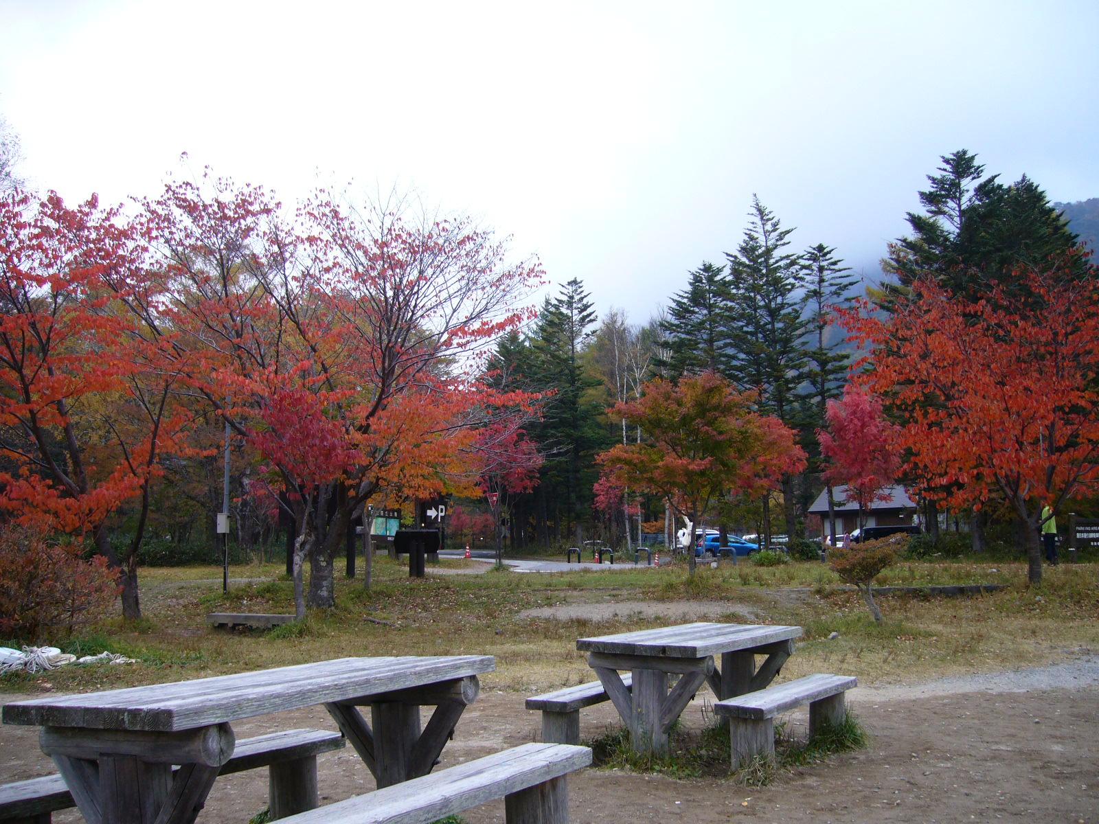 紅葉♪_d0091994_17391096.jpg
