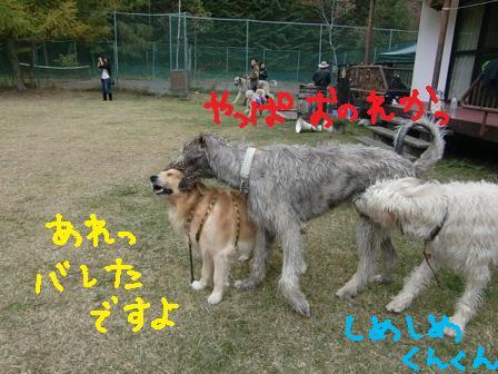 f0176830_18312915.jpg