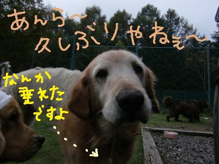 f0176830_1843025.jpg