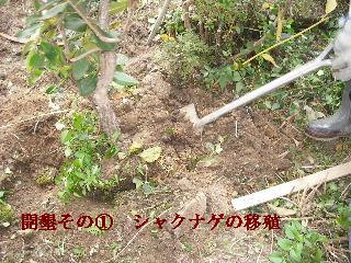 家庭菜園作り_f0031037_20194090.jpg