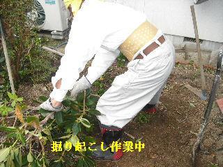 家庭菜園作り_f0031037_20195939.jpg