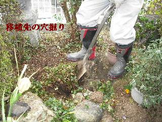 家庭菜園作り_f0031037_20201149.jpg