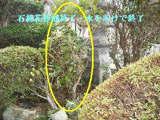 家庭菜園作り_f0031037_20202358.jpg