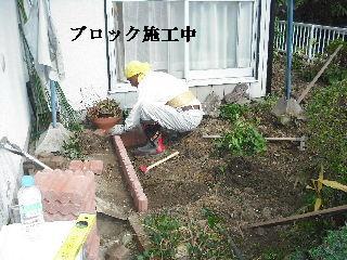 家庭菜園作り_f0031037_20222585.jpg