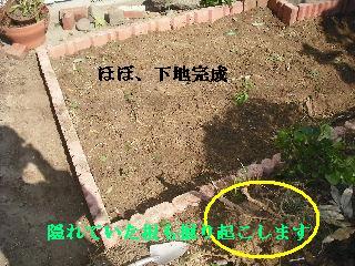 家庭菜園作り_f0031037_20231175.jpg