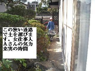 家庭菜園作り_f0031037_2025378.jpg