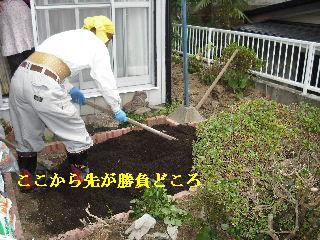 家庭菜園作り_f0031037_20255930.jpg