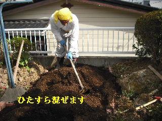 家庭菜園作り_f0031037_20262695.jpg