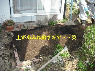 家庭菜園作り_f0031037_20263657.jpg