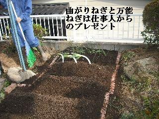 家庭菜園作り_f0031037_20271995.jpg