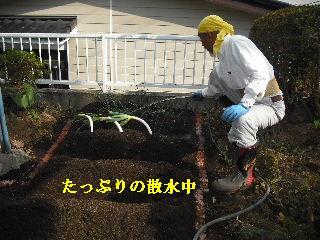 家庭菜園作り_f0031037_20274413.jpg