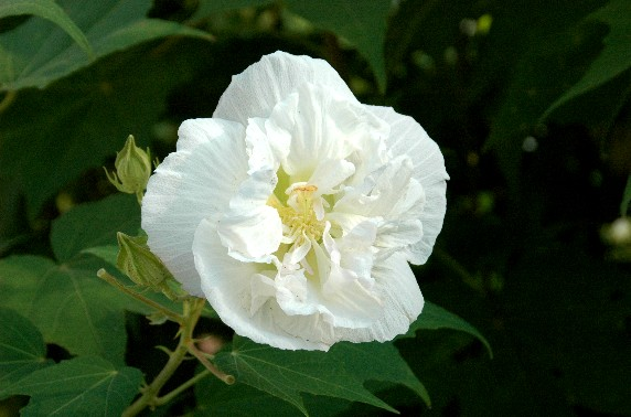 和歌山県植物公園緑花センター _b0093754_23541126.jpg