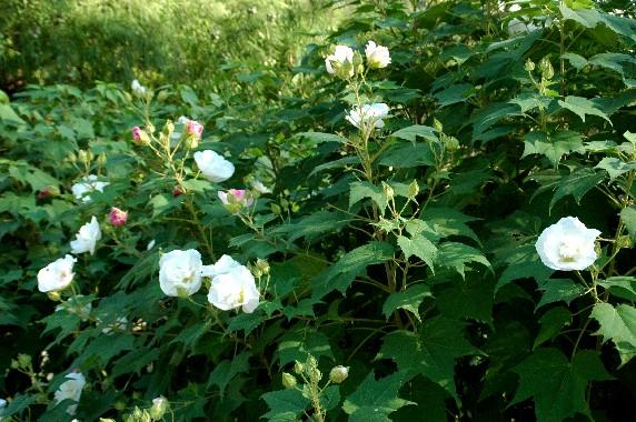 和歌山県植物公園緑花センター _b0093754_2354390.jpg