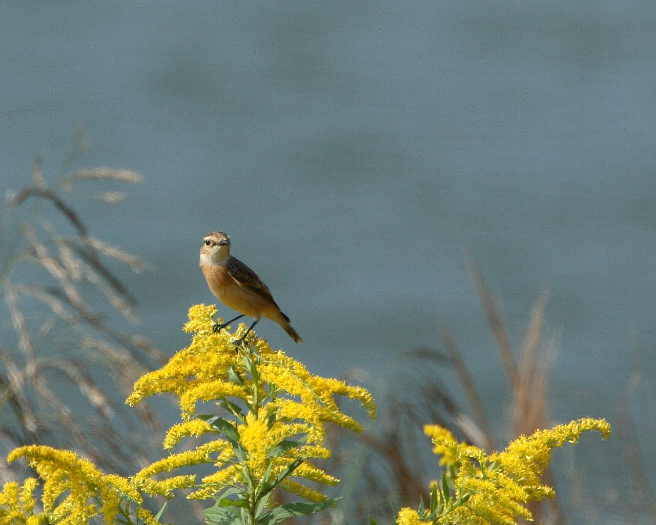 夏鳥もまだ頑張ってます。_f0105570_22164057.jpg