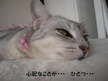 c0139488_0104766.jpg
