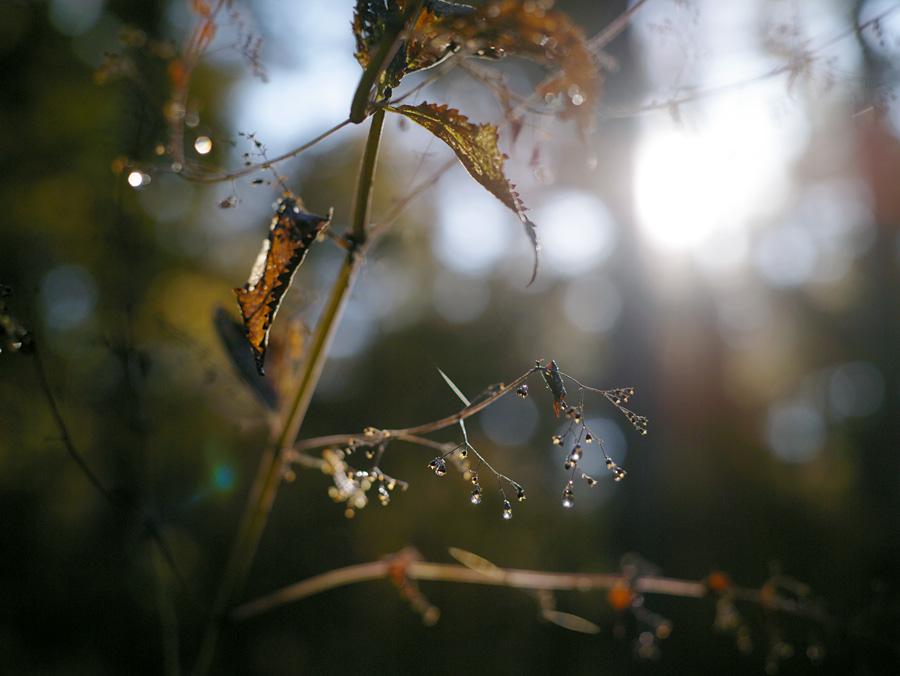 秋の森で写真を考える_c0065410_2015188.jpg