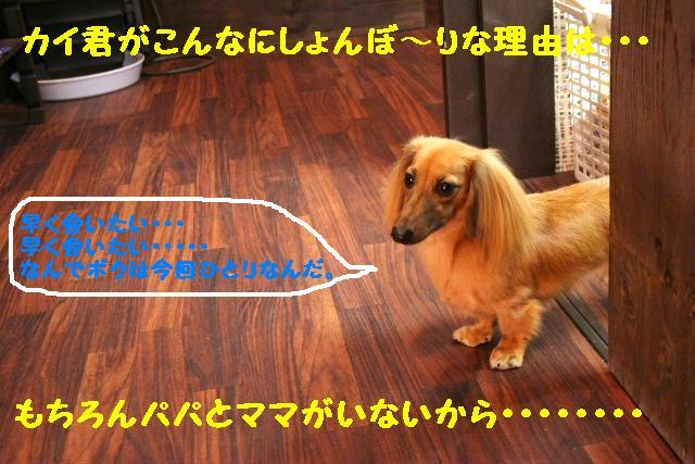 b0130018_18413240.jpg