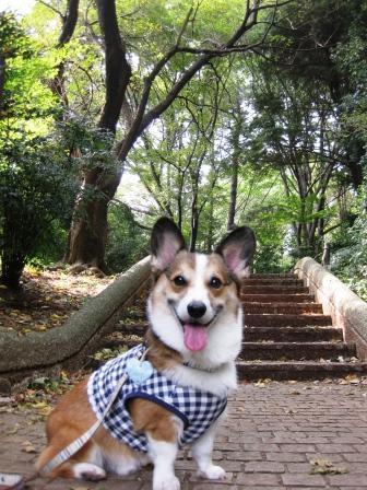 公園散歩…_f0155118_7381291.jpg
