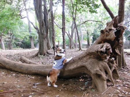 公園散歩…_f0155118_7383991.jpg