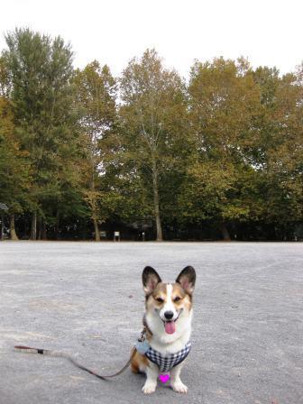 公園散歩…_f0155118_7395776.jpg