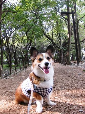 公園散歩…_f0155118_7402559.jpg