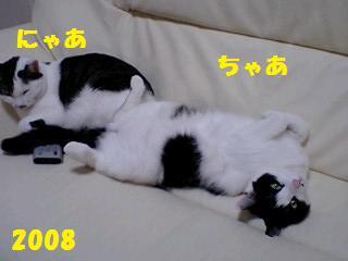 d0046821_1310533.jpg