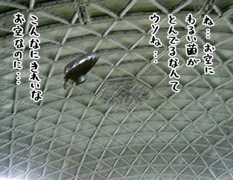 f0105741_10152434.jpg