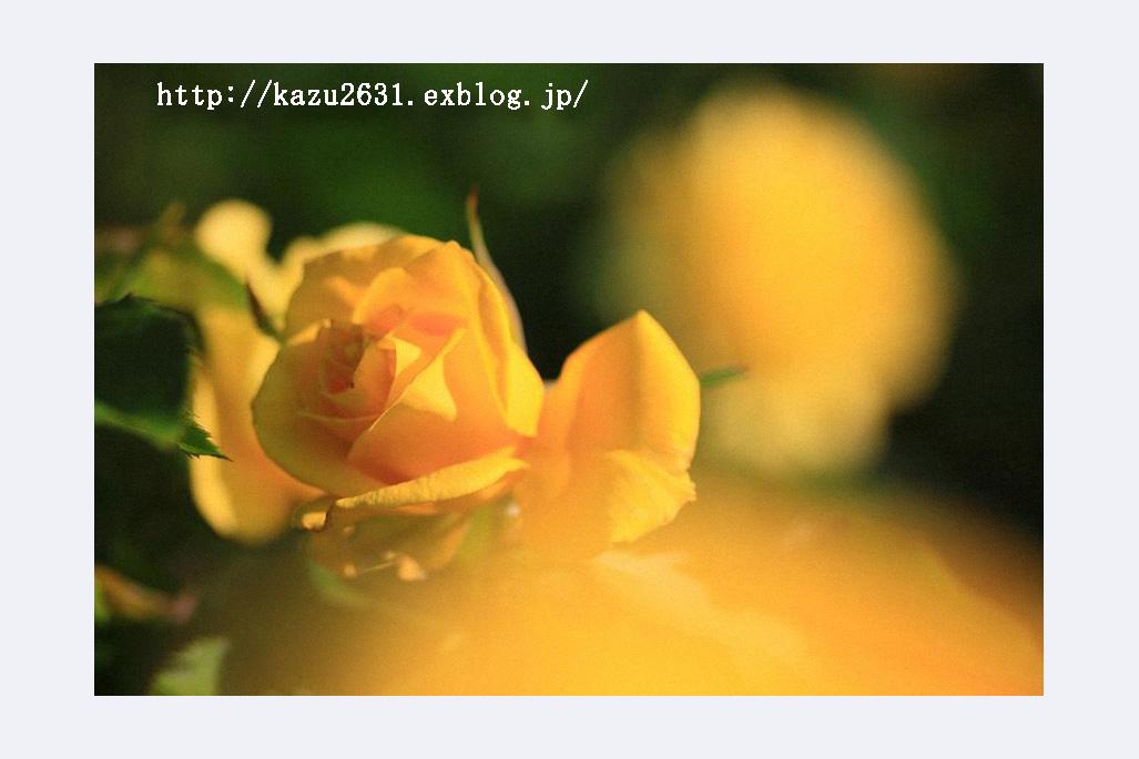 b0180042_22192398.jpg