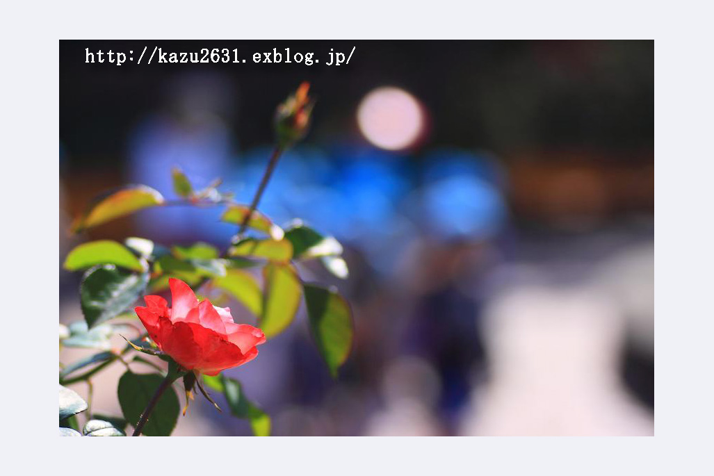 b0180042_22215846.jpg