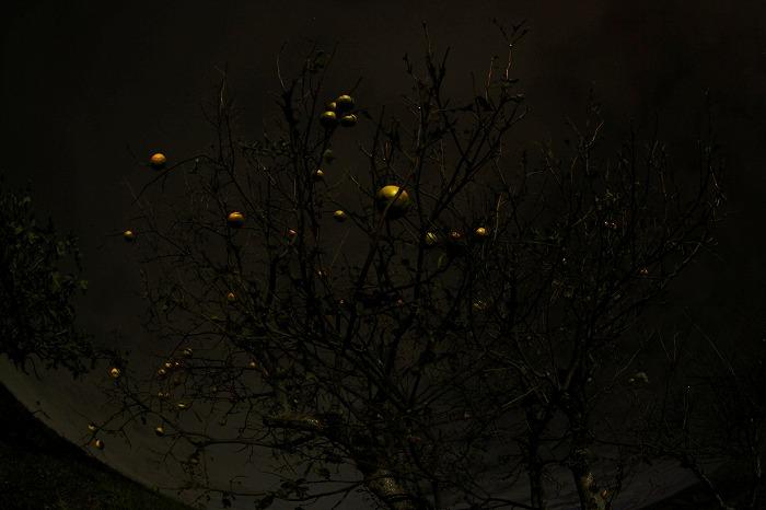 柿と夜空と・・・☆_a0122544_21593016.jpg