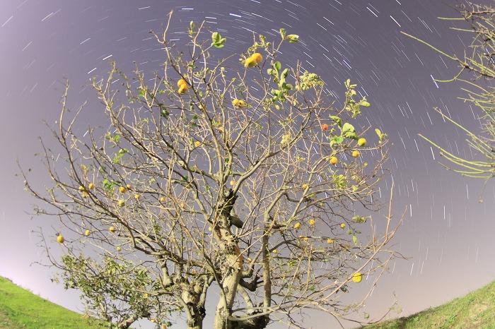 柿と夜空と・・・☆_a0122544_2214160.jpg