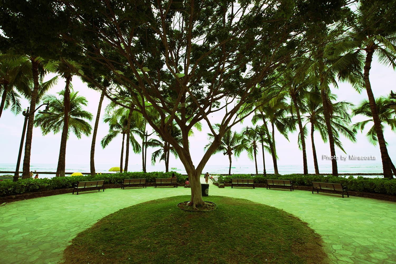 Oval -World of 16 in Hawaii-_e0140159_22455569.jpg