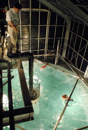 マグロ 水槽で養殖_b0052564_11562981.jpg