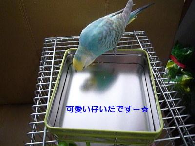b0062090_0142680.jpg