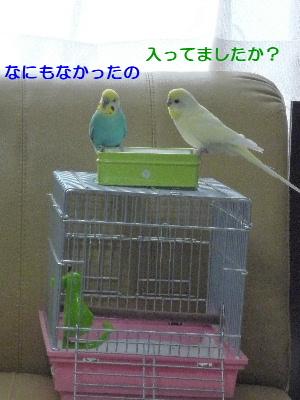 b0062090_075511.jpg