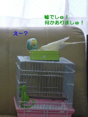 b0062090_081312.jpg