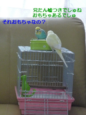 b0062090_084453.jpg