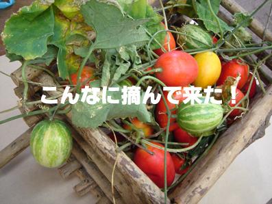b0109796_10434220.jpg