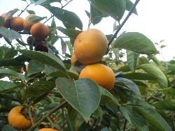 時には、喜べない収穫も...。_f0018099_224588.jpg