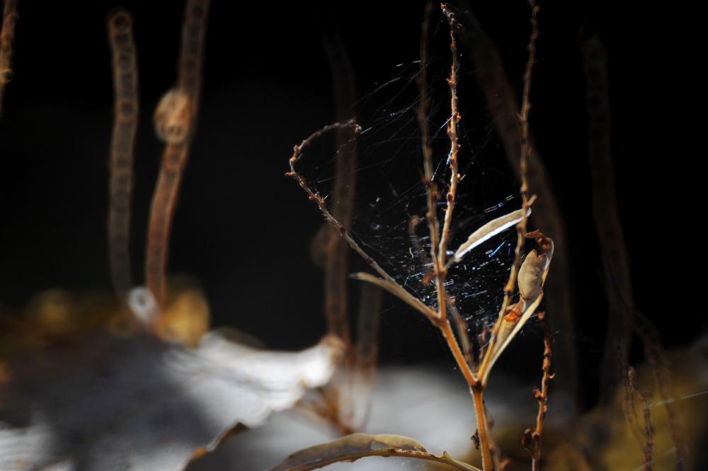 秋の森で写真を考える Ⅱ_c0065410_23135479.jpg