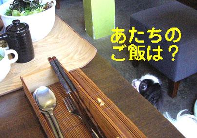 自転車で京都御所へ_c0199014_10392614.jpg
