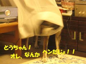 f0143123_2003015.jpg