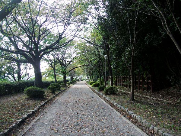「京都山科・四宮・琵琶湖疏水遊歩道」_d0133024_1719254.jpg