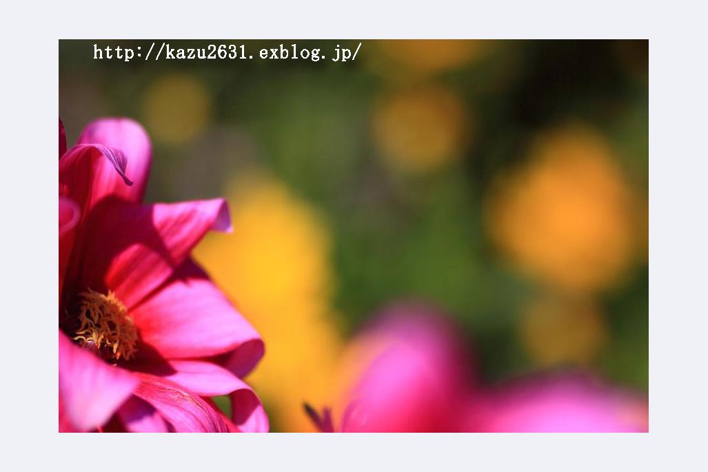 b0180042_7564978.jpg