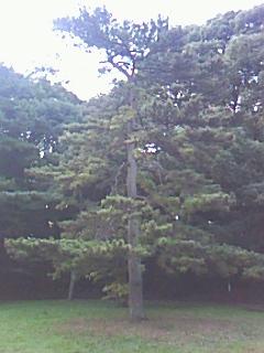 木の気のパワー_d0069964_933381.jpg