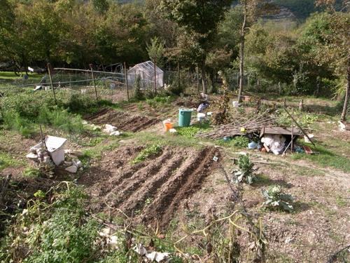 雨の前に豆を蒔きました~10月の畑_f0106597_17271867.jpg
