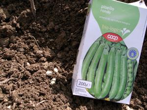 雨の前に豆を蒔きました~10月の畑_f0106597_17313261.jpg