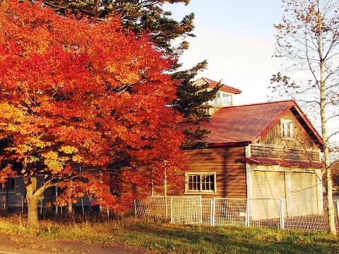 2009年10月22日(木):秋晴れ続く_e0062415_17313354.jpg